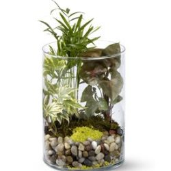 Garden in Glass - Sweet Lily's