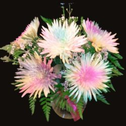 Kaleidoscope - Sweet Lily's